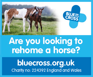 Blue Cross 2020 B (Staffordshire Horse)